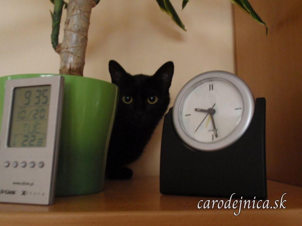 Čierna mačka medzi dvoma hodinami ukazujúcimi rozdielny čas o 5 minút