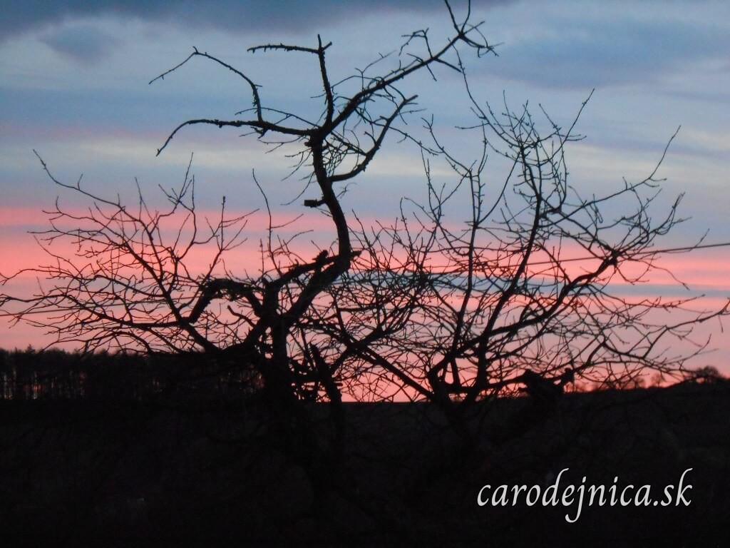 Čierne konáre stromu na zafarbenej oblohe západom slnka