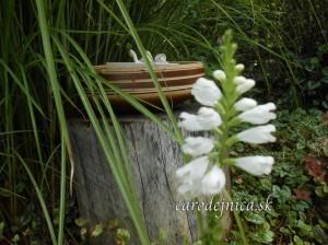 Zátišie v záhradke plnej byliniek