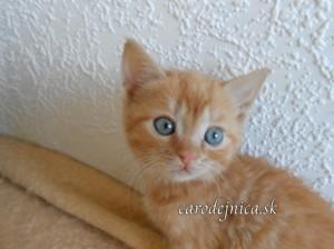 Zrzka mačiatko Angelika