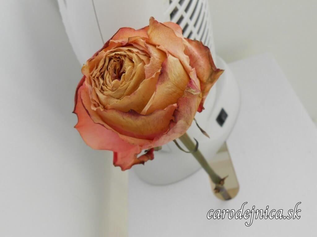 Vysušená darovaná naaranžovaná ruža