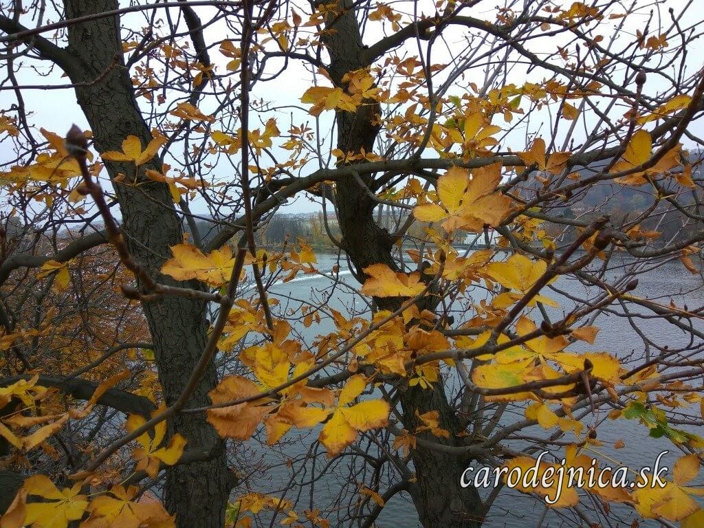 Žlté jesenné listy na stromoch pri Vltave v Prahe
