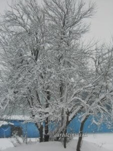 Modrá zima