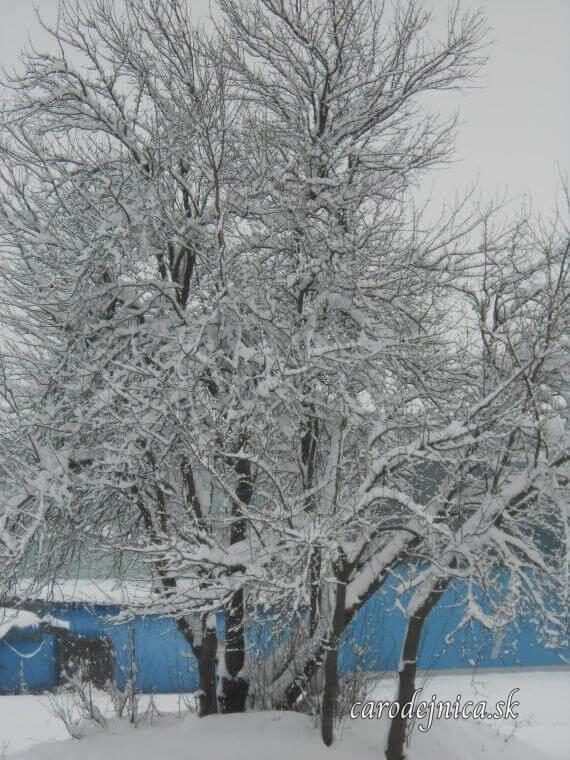 Zasnežený strom a na pozadí modrý plot
