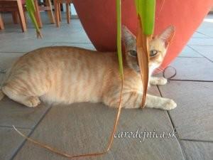 Ryšavo-pruhovaná mačka sediaca na podlahe pred nádobou kvetináča