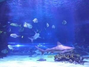 morské akvárium s rybami