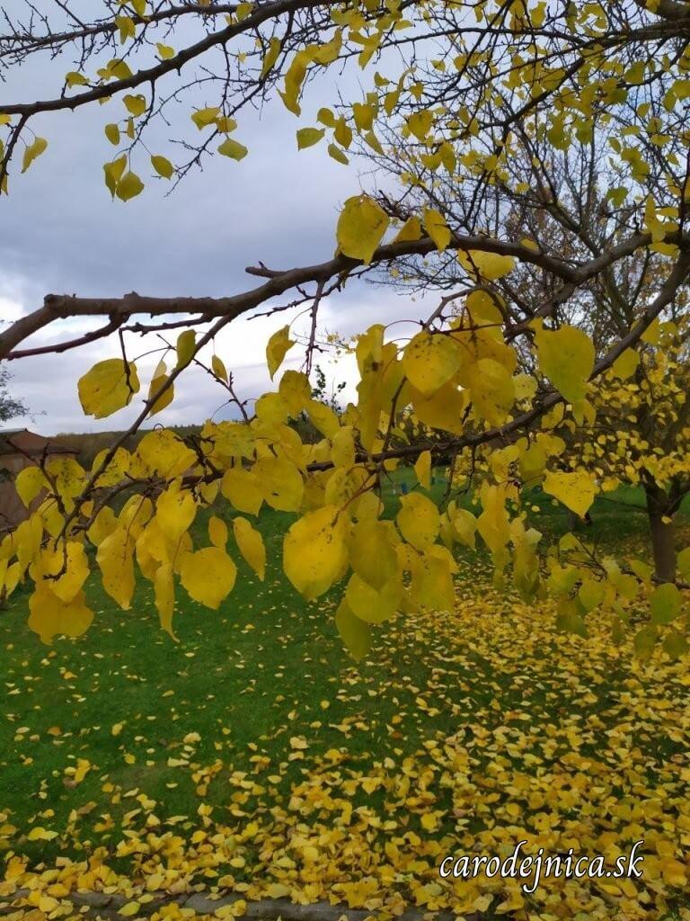 krajina a žlté lístie na strome a pod stromom na jeseň