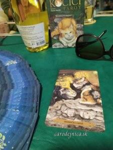 kočičí tarot na pracovnom stole, fľaša bieleho vína a slnečné okuliare