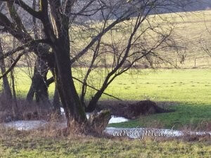 kľukatý potok a stromy